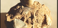 Haldimand and Norfolk County, Ontario have become an attractive area to expolore for marine fossils.