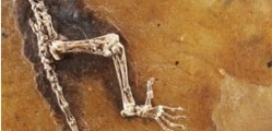 "Ida, one of the most complete primate fossils ever found, is considered to be a 47-million-year-old human ancestor ""missing link"".  Photograph: Atlantic Productions Ltd"