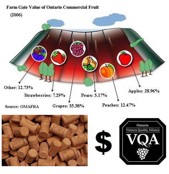 With grapes now leading the charge in terms of Fruit farm value- will more Ontario fruit farmers abandon or downsize their traditional operations and move towards establishing a winery? CP