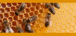 Honey Bees Banner