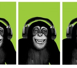 Listening Chimps Banner