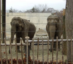 11-hall-of-shame_buttonwood-park-zoo_ruth-emily-credit-friends-of-ruth-and-emily