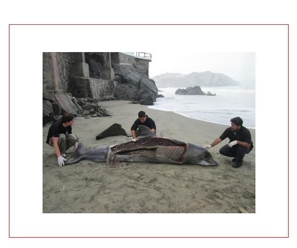 Help End Peru's Savage Dolphin Hunt By Adding Your Signature