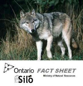 Ontario MNR Fact Sheet Coyote