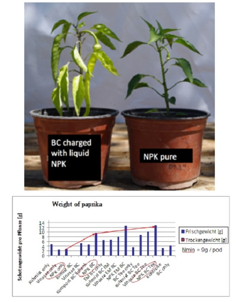 """""""When we started in 2011 to load biochar with high amounts of liquid NP-fertilizer and tested them in pod trials, we could prove reduced nutrient leaching after simulated strong rain events. When we planted a second culture (paprika after radish) in the same pods without additional fertilization, plant growth was significantly improved in the biochar treatments (see image). From an economic point of view, the difference in growth might have been not relevant as some additional fertilization would have been cheaper than the price of biochar that saved some mineral fertilizer. However working with low amounts of nutrient enhanced biochar [1 t per hectare]  applied as slow release fertilizer close to the roots every year seems very promising when viewed from both an economic and ecological perspective. """" Ithaka Institute"""