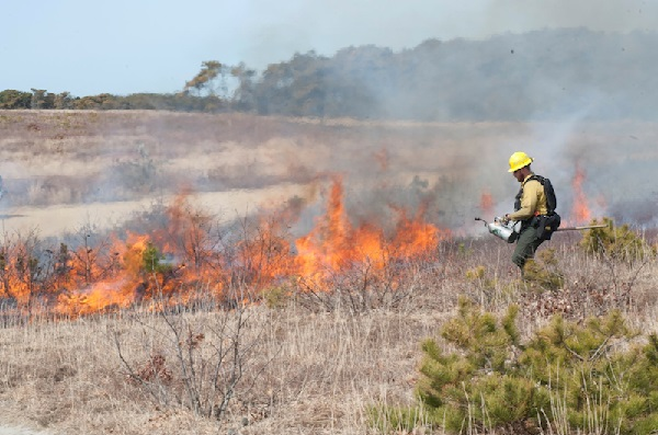 Controlled burns help reduce fuel for wildfires and restore natural areas. photo: Mark Lovewell -vineyardgazette.com