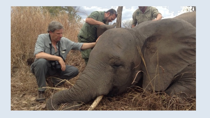 Act Now Or Lose African Elephants Forever