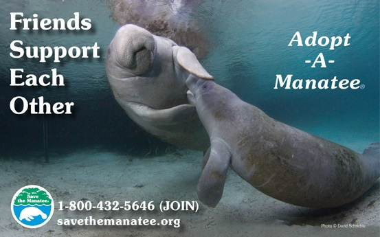 Adopt A Manatee Club May2016
