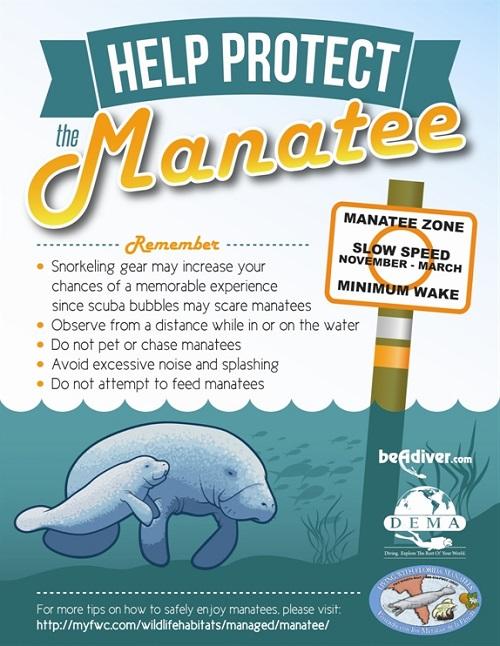 Help Protect Manatee Be A Diver Dot Com
