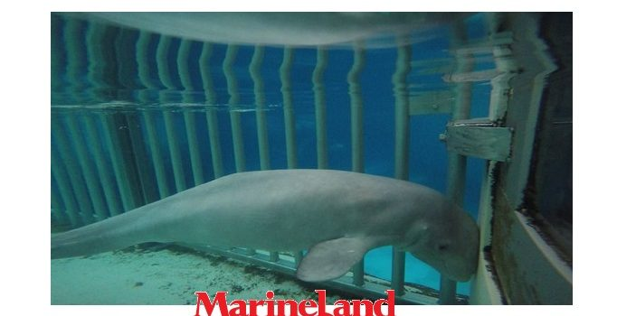 niagara falls ontario marineland shamed as worst aquarium in canada