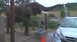 7-wildlife-safari_george-used-as-an-elephant-carwash_credit-kpic