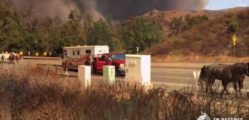 California Wildfire Horse Rescue