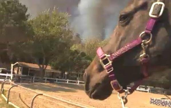 Horse evacuation Irvine Park wildfire
