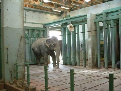 Calgary Zoo Elephant Lucy