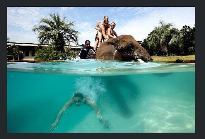 Bubbles the Elephant at Myrtle Beach Safari